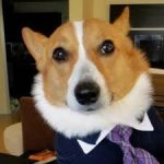 """Specificity Matters: Suspect's request for a """"Lawyer, Dog"""" ambiguous"""